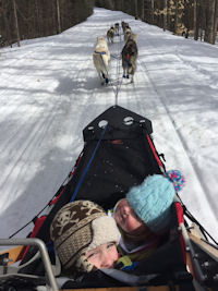 The musher eye view of the sled dog team on the trail.