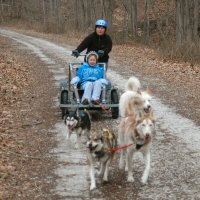 Dog sled rides during a birthday party