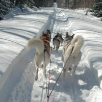 The team shows their butts to the musher