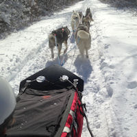 Six sled dog team near Freeland, MD