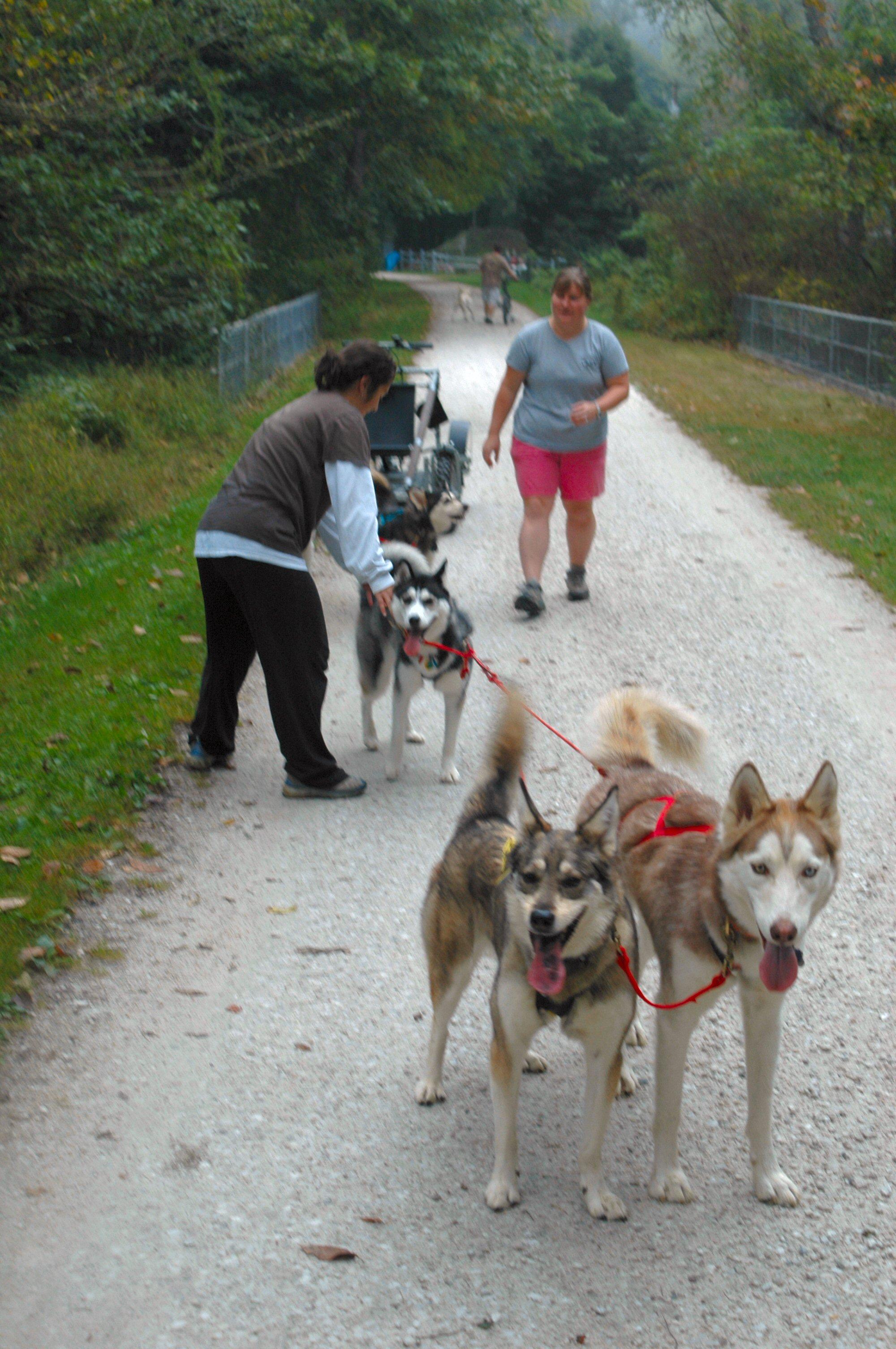 Dog Sledding In Alaska   Experience Mushing Like An ...