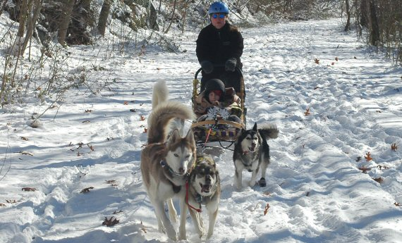 Home school children learned about dog sledding