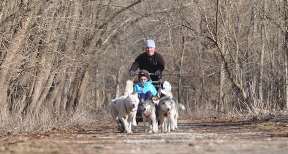 Dryland dog sledding near Sparks, MD