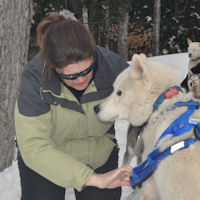 Visiting sled dog Kelims Lumos serves as a model for harnessing