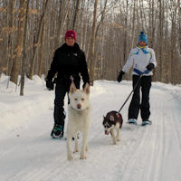 Snowshoeing with the dogs