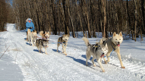 Acadia, Loomis, Weld, Peeps, Okemo, and Sobo return home from a run in Lexington Township, Maine