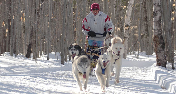 Dog sledding in Starks, ME