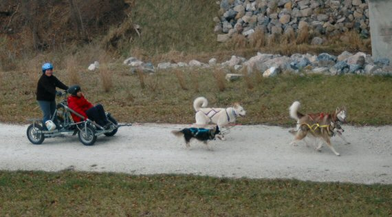 The sled dog team from above on the NCR trail.