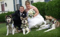 Our snow dogs were stars in our wedding.