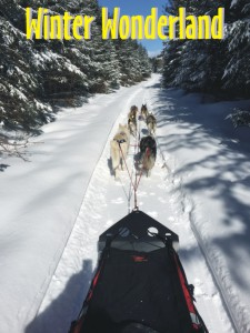 Dog sledding through a winter wonderland