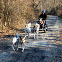 Dog sled ride through northern Baltimore County